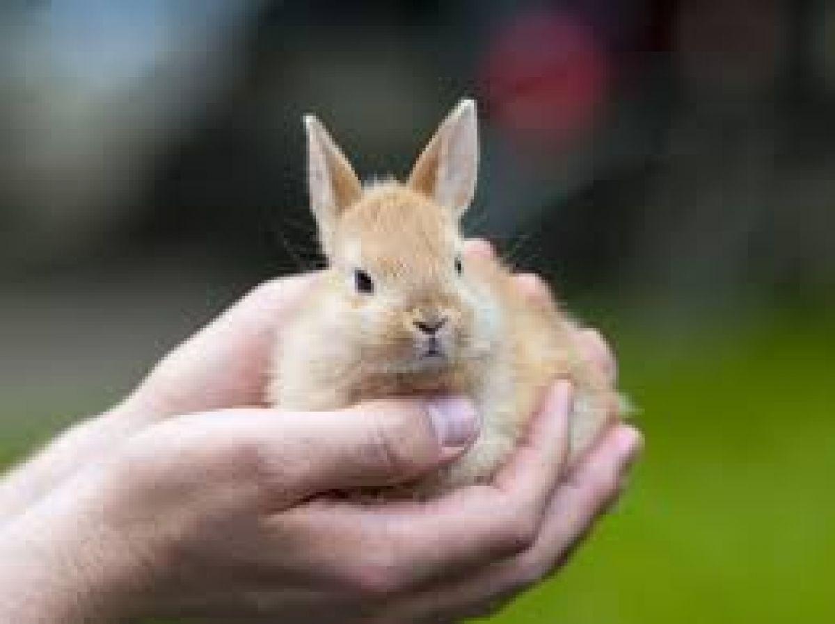 alimenti per roditori da compagnia: conigli nani - criceti