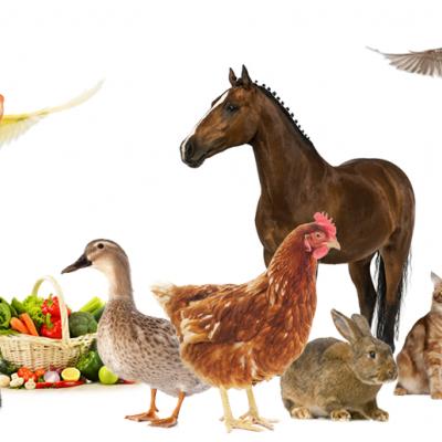 ALIMENTI PER ANIMALI CANI, GATTI, RODITORI, UCCELLI, ECC... CONFEZIONI DA 1 KG A 25 KG SECONDO LE VOSTRE ESIGENZE